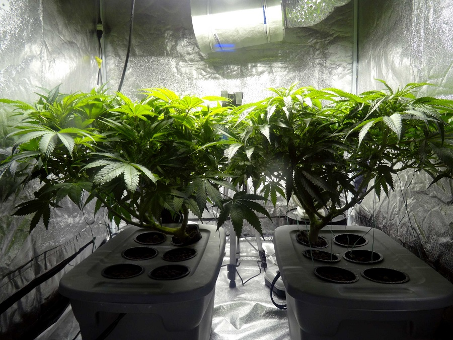 Guide To Buying Grow Tent For Your Cannabis